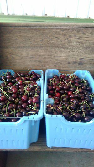 Cherrys for Sale in Sunnyside, WA