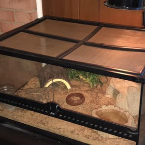 Leopard Gecko + Terrarium for Sale in Alexandria, VA