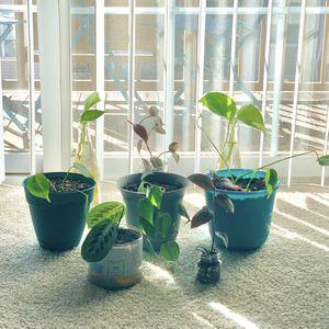 Houseplants 🌱 for Sale in Reston, VA