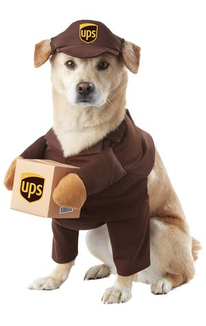 New UPS delivery dog Halloween costume size medium for Sale in Henderson, NV