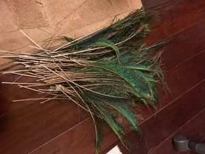 Peacock feathers (faux) for Sale in Waltham, MA