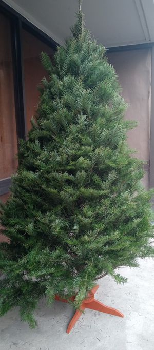 Real Christmas tree with stand 7ft for Sale in San Jose, CA