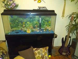 55 gallon fish tank accessories with it for Sale in Overland, MO