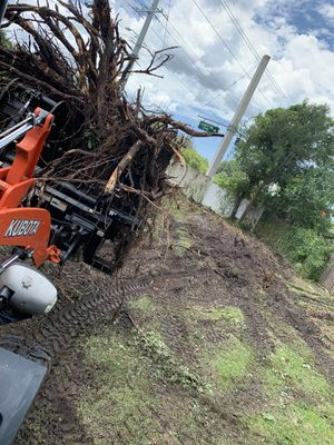 Tree work for Sale in New Port Richey, FL
