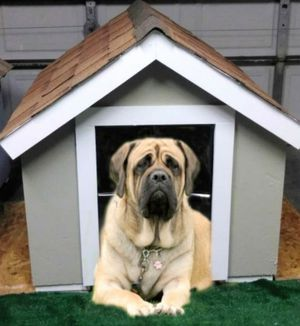 New Large Dog House for Sale in Las Vegas, NV