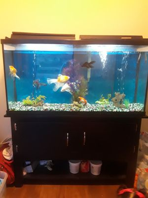 60 gal. Fish tank for Sale in Laveen Village, AZ