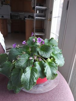 Plant for Sale in Prineville,  OR