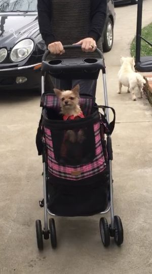 Dog stroller with detachable carrier & under storage for Sale in Akron, OH