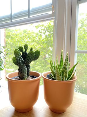 Plants (cactus and succulent). $25/each. First come first serve. Firm price. for Sale in Alexandria, VA