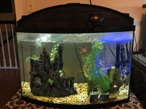 Aquarium, Bow Front-36 gal -Don't Miss Out for Sale in Sacramento, CA
