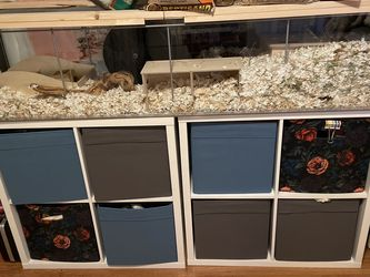 HAMSTER CAGE WITH ALL ACCESSORIES for Sale in Tacoma,  WA