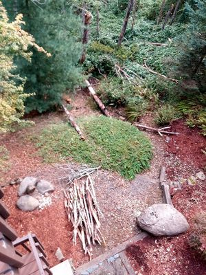 Free wood: if you cut for Sale in Portland, OR
