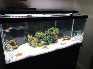 75 gallon fish tank. With extras... for Sale in Bowie, MD
