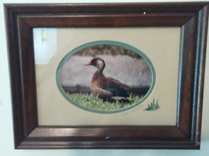 Framed wildlife photo by Valerie Marsters for Sale in Wichita, KS