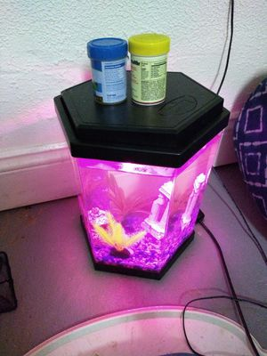Filtered Color changing fish tank. for Sale in Davenport, IA
