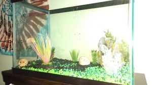 Fish tanks for Sale in Clarksville, TN