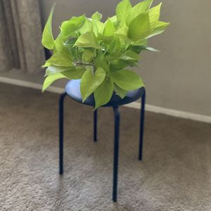 Plant Stand / Stool for Sale in Bakersfield, CA