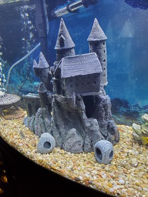 Fish tank decorations for Sale in Tampa, FL