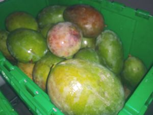 5 SUPER LARGE ORGANIC MANGOES for Sale in Delray Beach, FL
