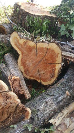 Free cedar wood for Sale in Lynchburg, VA