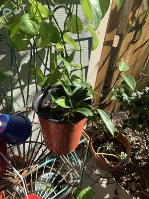 House plants for Sale in Tampa, FL