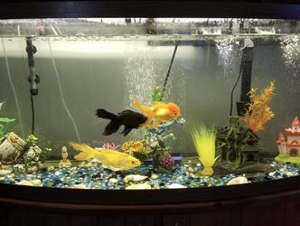 75 Gallon Fish Tank for Sale in Laurel,  MD