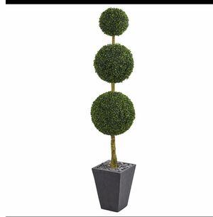 Plant for Sale in Garland, TX