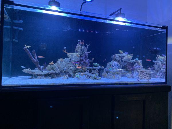 150 Gallon Starfire Reef Ready