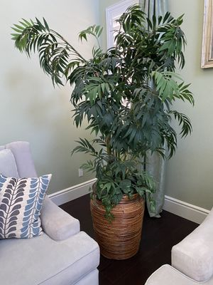 🌿 Paradise Areca Palm Tree for Sale in Victorville, CA