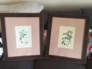 Set of Matted framed floral/herb specimen poster for Sale in Washington, DC