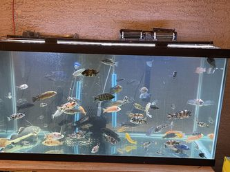100 Gallons Fish Tank for Sale in Phoenix,  AZ