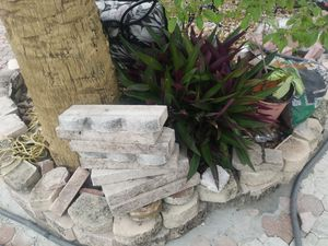 Bricks border. Good condition 54 boders for Sale in Lake Worth, FL