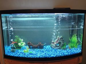 36 gallon bow front fish tank with custom stand for Sale in Toms River, NJ