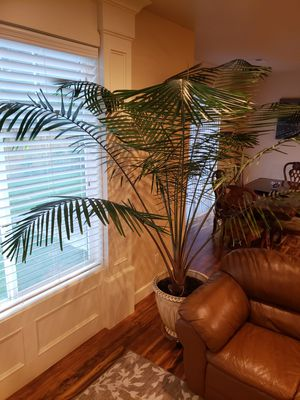 Huge real palm tree for Sale in Vancouver, WA