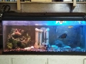 Fish and fish tank for Sale in Detroit, MI
