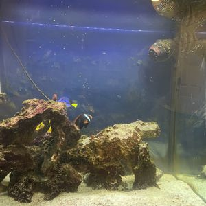 Salt Water Fish Tank Complete for Sale in Woodland, CA