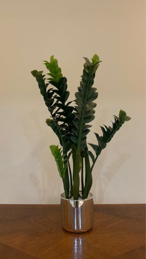 Fake plant for Sale in Poolesville, MD