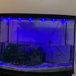 37 Gallon Fish Tank With Fish Tanks Stand for Sale in Hillsboro,  OR