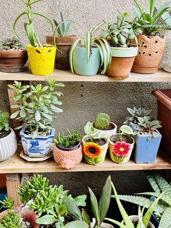 Potted Plants Succulents Snake Plant Jade Aloe Vera Cactus Plumeria Ceramic Terra Cotta Pots Starting at $6! for Sale in Los Angeles,  CA