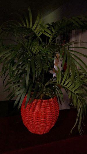 Fake Plants for Sale in Visalia, CA