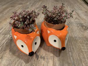 Cute plants for Sale in Las Vegas, NV
