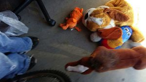Stuffed animals for Sale in Welby, CO