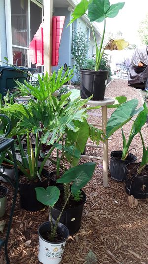 Various Plants for Sale for Sale in Port Charlotte, FL