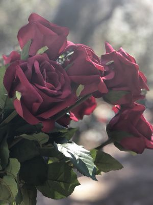 A dozen hyper realistic long stem roses perfect for Valentine's Day for Sale for sale  Norcross, GA