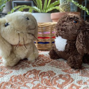 Two American Girl Bunnies for Sale in Austin, TX