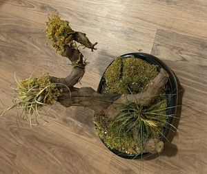 Free plant for Sale in Jersey City, NJ