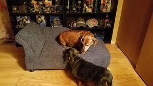 Lazy boy dog bed for Sale in Weldon Spring, MO
