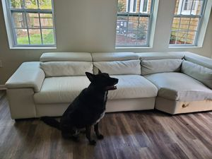 Free couch! Dog not included. for Sale in Norfolk, VA