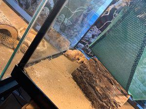 Spotted Leopard Geckos for Sale in Joliet, IL