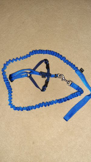 Kitten Harness and Leash for Sale in Normal, IL